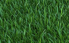 proxy-grass